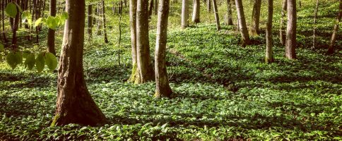 Greenlygreeen Naturvertrauen