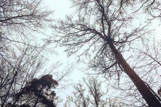Meine Heimat - der Wald